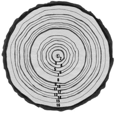 Tree Ring Drawings by Wider Tree Rings