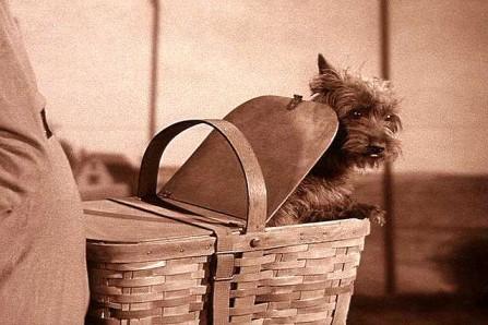 Toto-in-Gulchs-basket